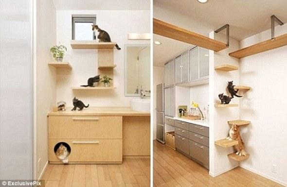 Cat flat 2