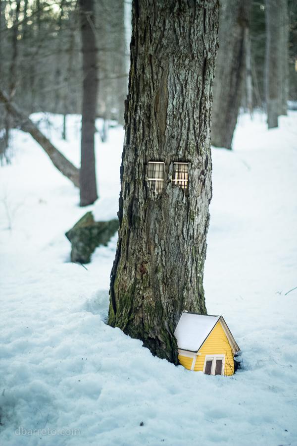 Woodhouses - Daniel Barreto