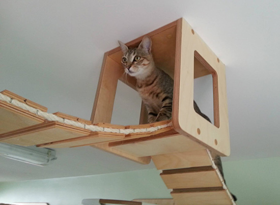 Goldtatze - cat furniture